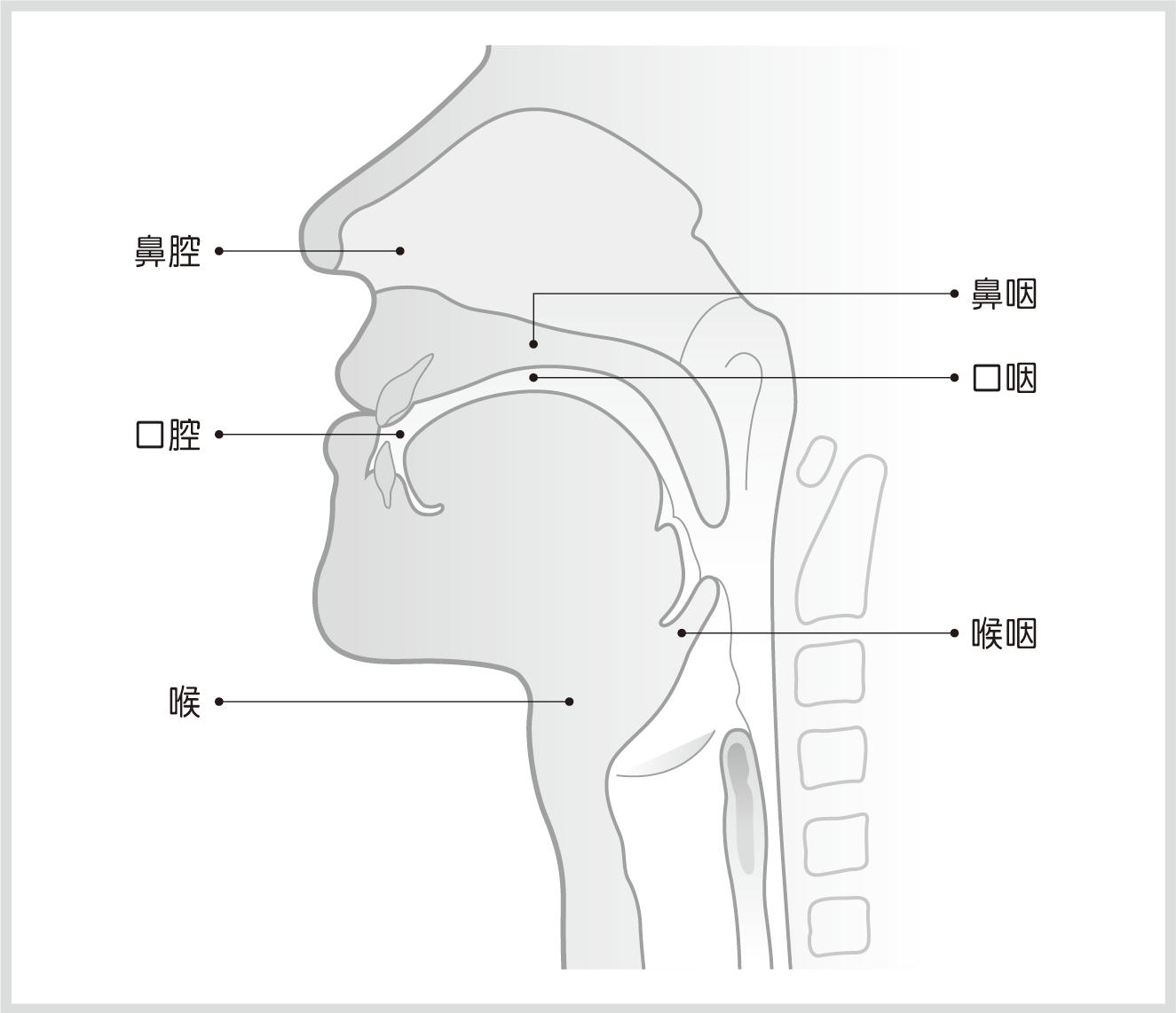口鼻喉結構示意圖