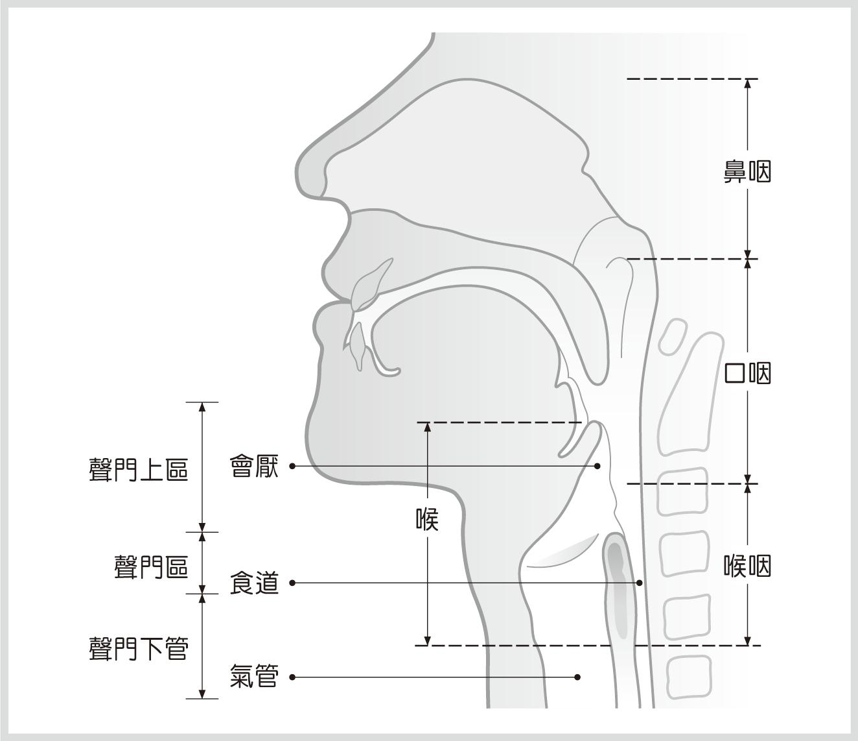 咽喉部位結構示意圖