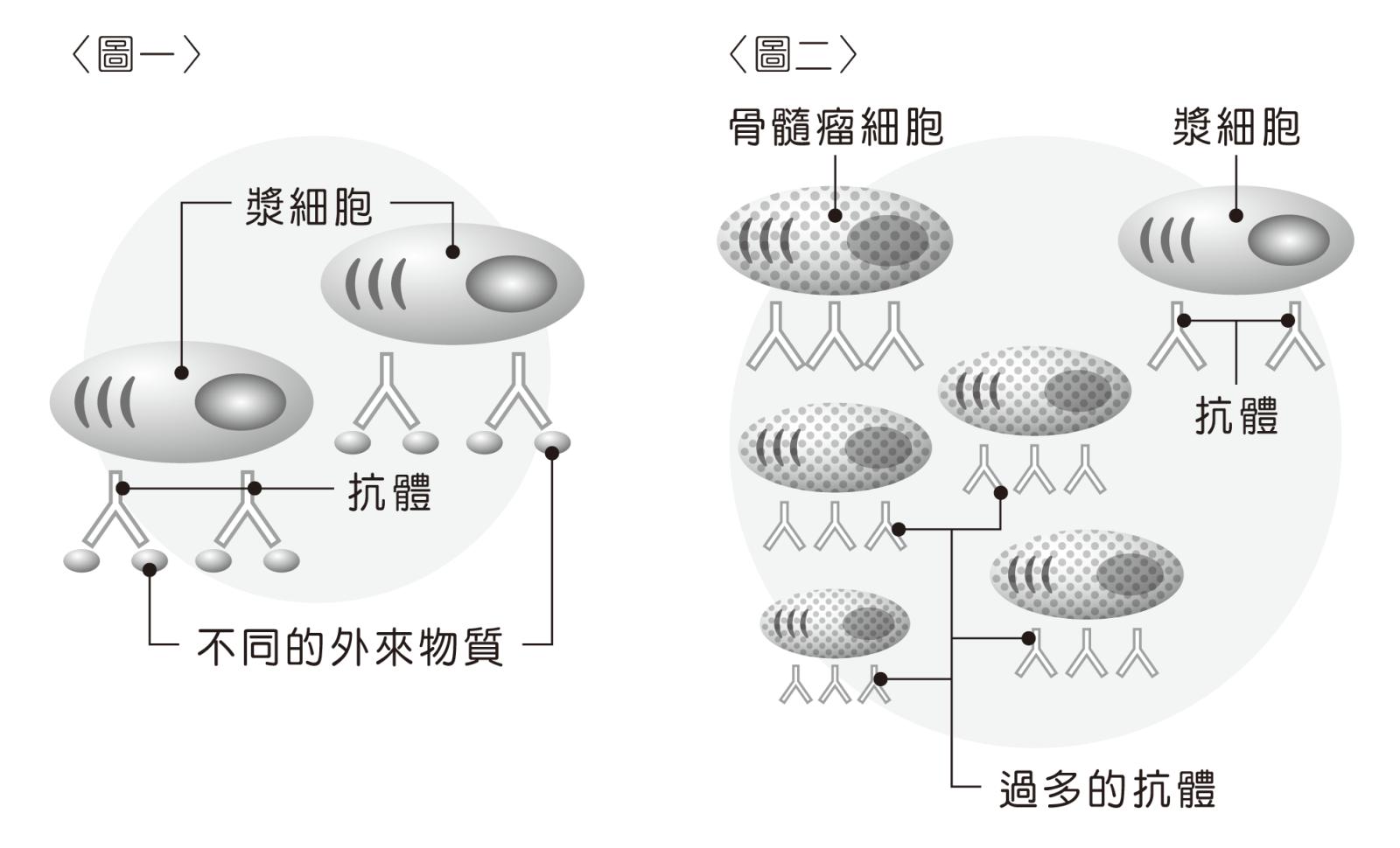 骨髓細胞示意圖