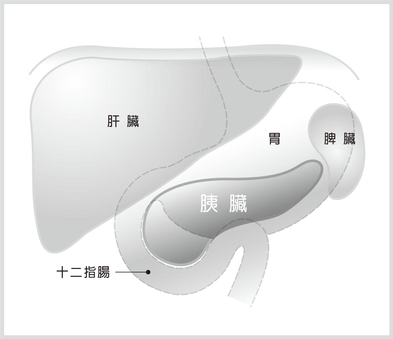 胰臟相對位置示意圖
